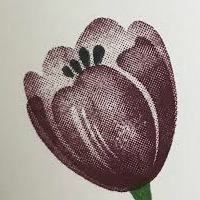 Fresh Fig Tranquil Tulips